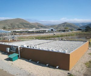 California Polytechnic State University natural wastewater treatment system.