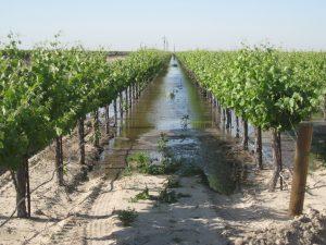flooded-vineyards_terranova