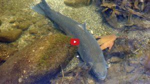 fish-video-final