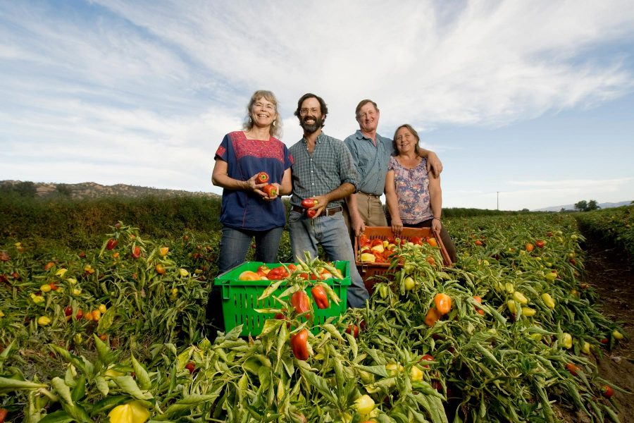 Four farmers from Full Belly Farm, with bell peppers