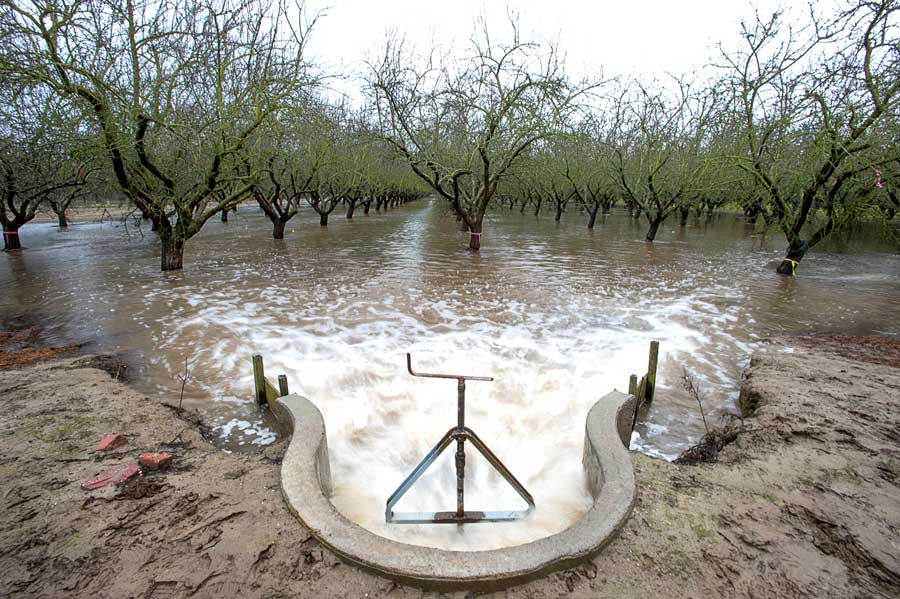 Flooding an orchard