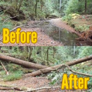 A before & after photo of an empty stream bed and wood installed.