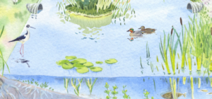Watercolor of a flourishing recharge basin — a featured illustration in the guide.
