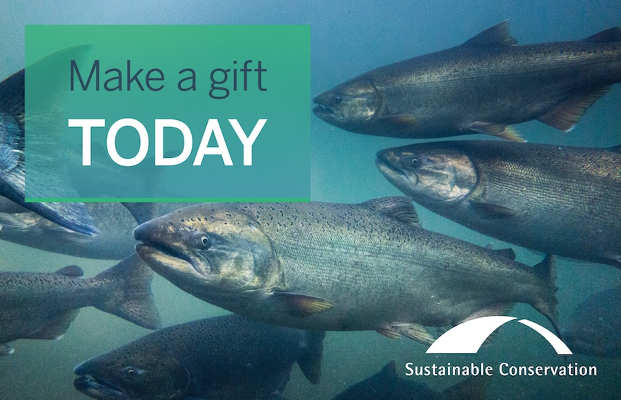 Make a gift today! Image shows salmon in the water.