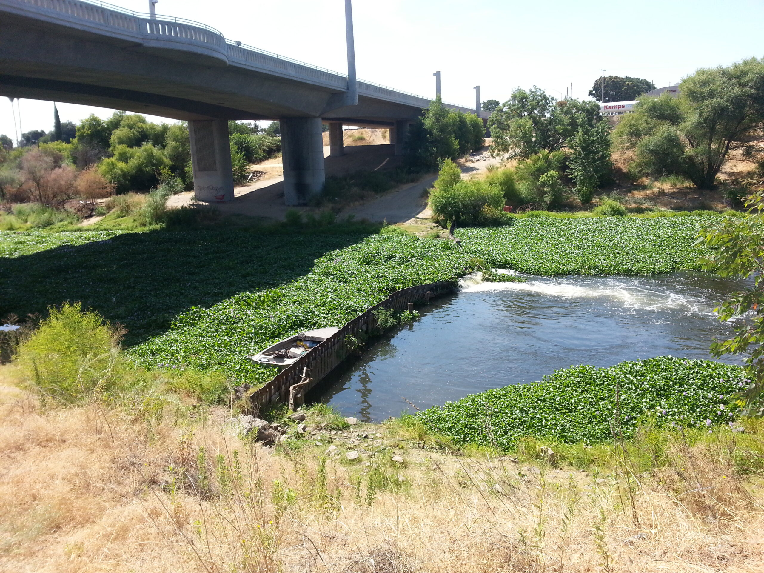 Dennet Dam & hyacinth_TRT